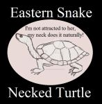 Reptile Buddies Eastern Snake Necked Turtle by UnicronHound