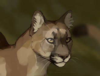 Cougar/Puma by dinychh