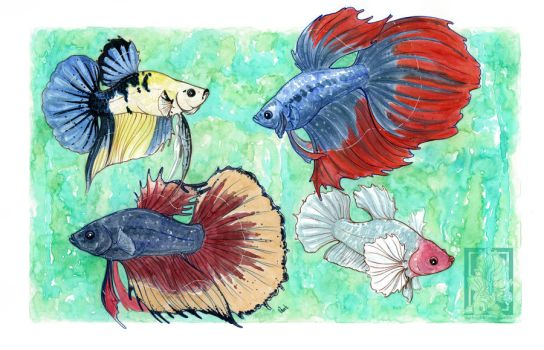 Four betta boys commission by Shadowmanic