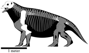 Tapinocephalus atherstonei skeletal reconstruction by SpinoInWonderland