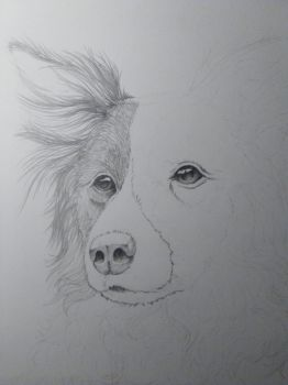 Animal drawing 01 - WIP 01 by RahByte