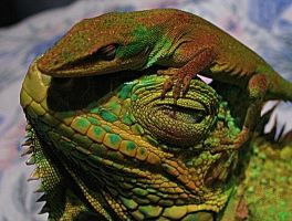 reptiles by Enahpets