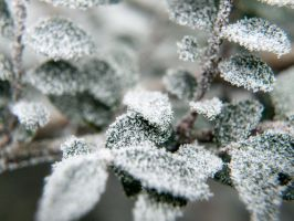 Ice 2 by Inilein