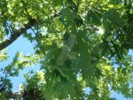 Brother Tree Leaves by Sheik2000