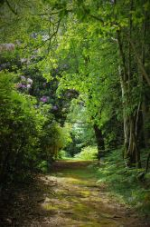 Forest Path by sweetlave
