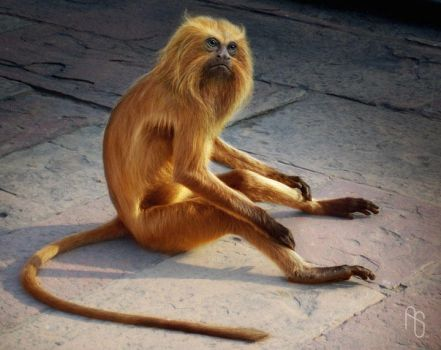 Golden Monkey 2 by aaronsimscompany