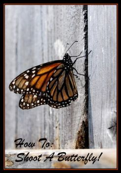 How To Shoot A Butterfly by TThealer56