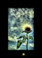 Sunflower by IMustBeDead