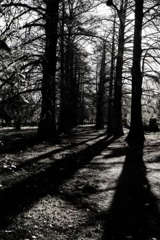 Into the woods by 61x