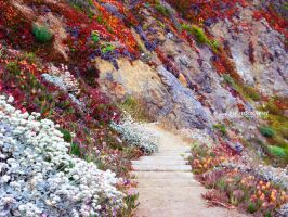 Path Through the Flowers by themindsofthedark