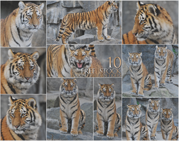 Stock - Young siberian tigers pack by NFB-Stock