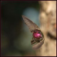 Winged Jewel X by JAHarrell