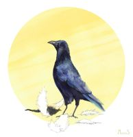 Crow by AnkaS