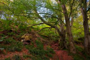 Northumberland Woodland 7 by newcastlemale