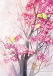 Cherry blossom by nguyenshishi