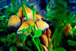 Mushrooms by LicamtaPictures