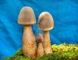 More HDR Mushrooms 10 by Dracoart-Stock