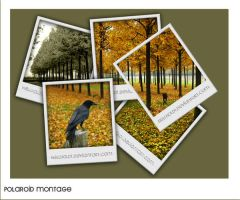 Polaroid Montage by hellhold1