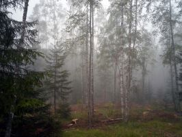 Forest 1005 by MASYON