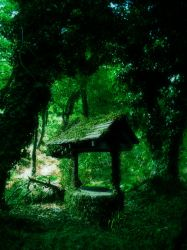 Stock: Forest by Randoms-Foundling