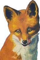 Fox (stock) by linux-rules