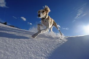 snow doging... by Alyat