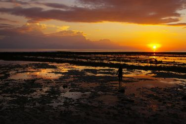 Coral Sunset by arcipello