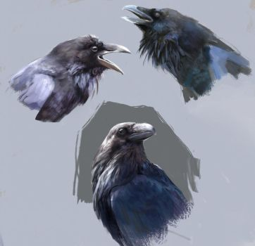 Raven studies by Ketunleipaa