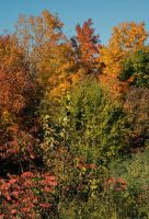 Vermont Colour by jackthetab