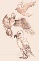 the stymphalian birds by pandorabox
