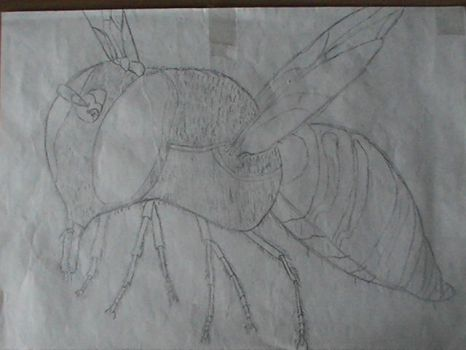 My old sketchs (2012) - 'Wasp' by WenexPL