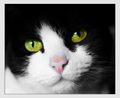 Cats eyes by hayleyonfire