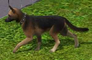 German Shepherd On The Sims 3 Pets!! (No CC!!) by Hereditarypickels
