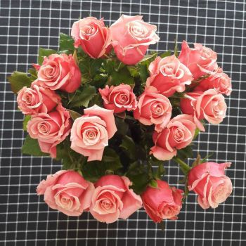 Roses and Checks by pahill