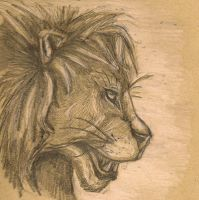 Lion Profile by Clairictures