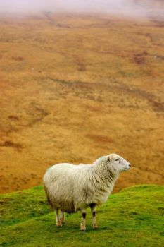 Mountain sheep by SV8