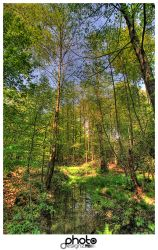 forest hdr by djunity