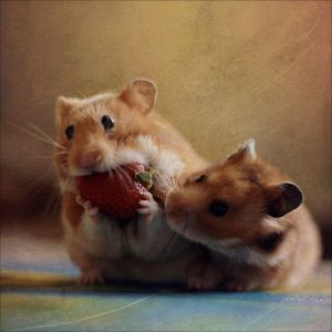 Cute Hamster's 2 by Canchupotterica