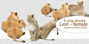 PNG STOCK: Lion - female by MAKY-OREL