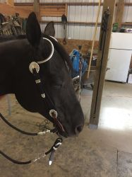 Show bridle stock 5 by Stripe13