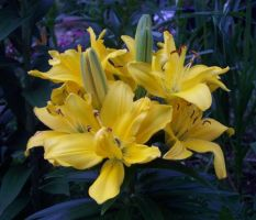 Lurid Lilies by Luprand