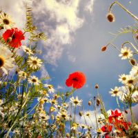 perfect summer by naturetimescape