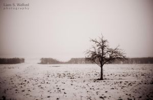 Tree in the cold and fog by liamw