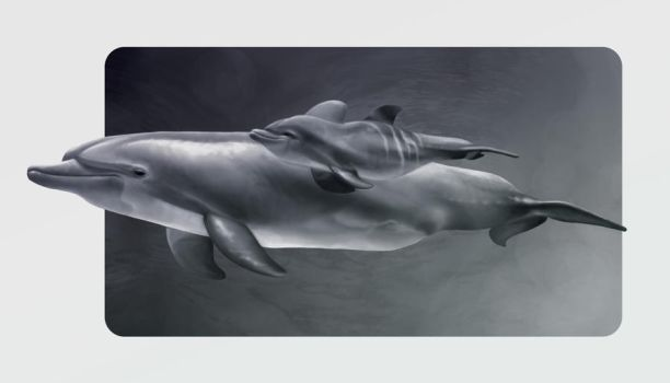 Dolphins by ChemDraw