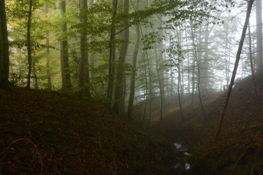 Foggy Forest 3 by SelvaStock