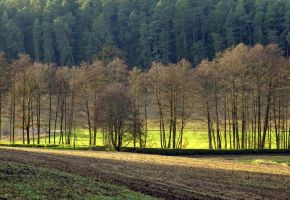 row of trees by Mittelfranke