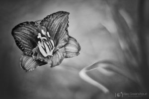 The Flower that Dreamed it was a Butterfly by alexgphoto