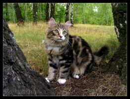 Cat in the forest by Zamkowa