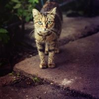 just a cat by odpium