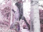 Archway Tree by Kate-ColourTheory